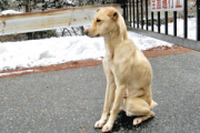 The dog waiting for its owner in Iida City, Nagano Prefecture