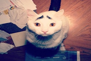 Sam, the cat with eyebrows, is the toast of Japanese netizens.