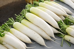 Japanese schoolgirl arrested for breaking into an elementary school, as well as stealing 100 daikon.