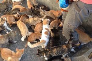 Japan's cat island delights netizens