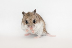 Hamster video takes Japanese internet by storm