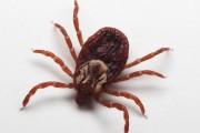Killer ticks in Japan spread SFTS virus