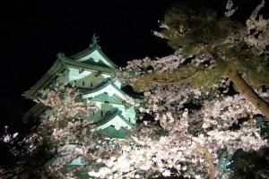cherry-blossom-festival-Japan-31