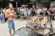 Dog meat festival in China draws reaction in Japan