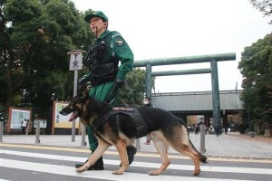 A sniffer dog at the Yasukini Shrine following explosion