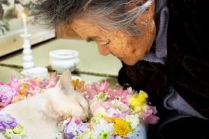 Japanese cat Fukumaru dies.