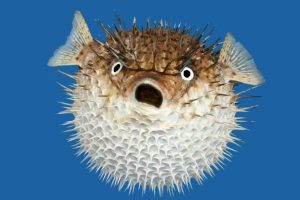 poison-puffer-fish-on-sale-supermarket-japan-03